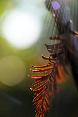 Autumn Photograph - Autumn Art By Artist Nature by Lilia D