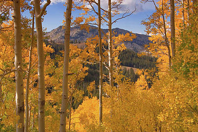 Photograph - Autumn Colors In The Wasatch Mountains by Utah Images