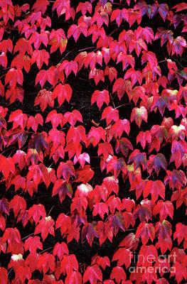 Photograph - Autumn Colors by Jim Corwin