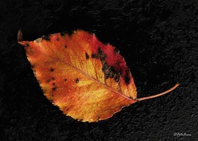 Photograph - Autumn Leaf by Alexander Fedin