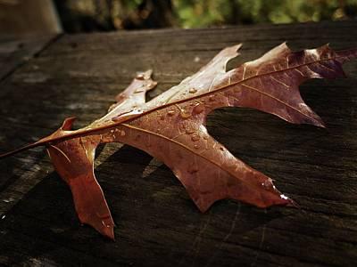 Photograph - Autumn Leaf... by Phyllis Meinke