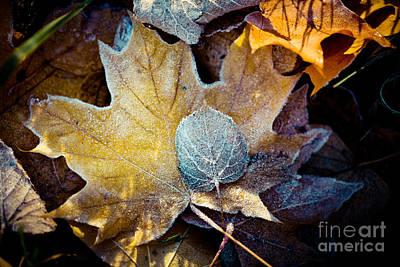 Autumn Leaves Frozen Artmif.lv Print by Raimond Klavins