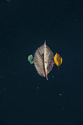 Photograph - 3 Autumn Leaves  by John McGraw