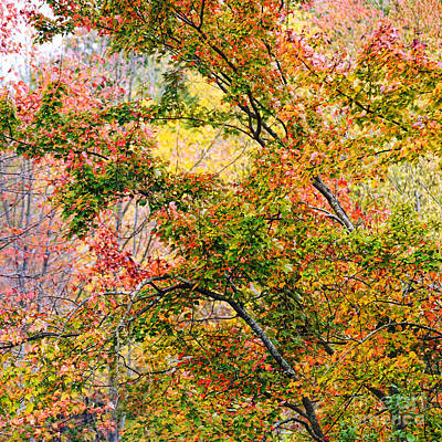 Yellow Trees Photograph - Autumn Series by HD Connelly