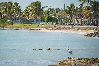 Queen Rights Managed Images - Beautiful Beach And Ocean Scenes In Florida Keys Royalty-Free Image by Alex Grichenko