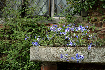 Vinatge Photograph - Beautiful Image Of Wild Blue Phlox Flower In Spring Overflowing  by Matthew Gibson