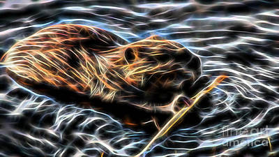 Beaver Mixed Media - Beaver Collection by Marvin Blaine