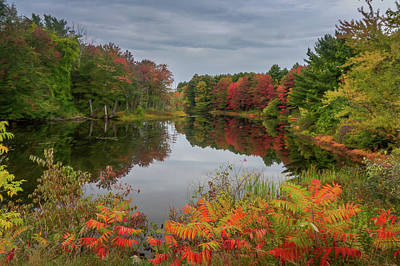 Photograph - Beside The Pond by Jane Luxton