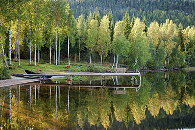 Birches And Reflection Art Print