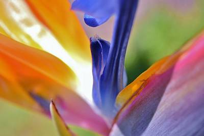 Animals Royalty-Free and Rights-Managed Images - 3 Bird of Paradise Macro by Linda Brody