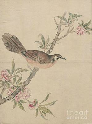 Dovecote Painting - Birds Of Japan In The 19th Century by Celestial Images