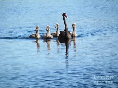 Photograph - Black Swan by Joyce Woodhouse