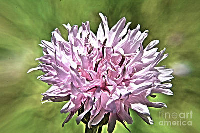 Photograph - Blooms by Janice Spivey