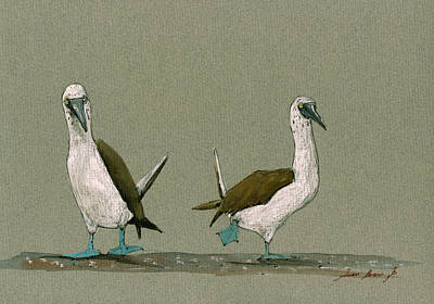 Blue Footed Boobies Original