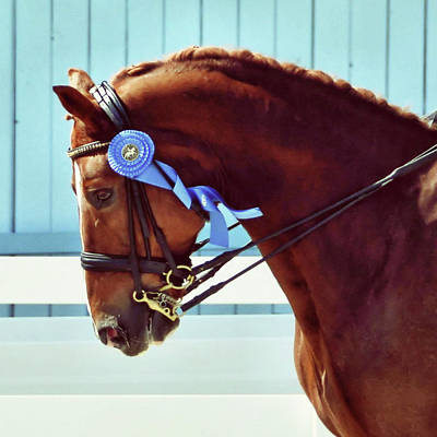 Photograph - Blue Ribbon Print by JAMART Photography
