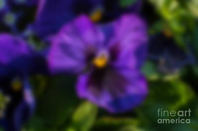 Blurred Seasonal Flowers With Dark Green Background Print by Rudra Narayan  Mitra