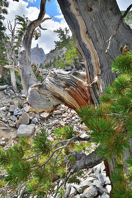 Photograph - Bristlecone Loop Trail by Ray Mathis