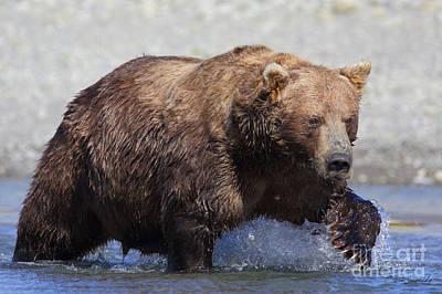 Photograph - Brown Bear by Steve Javorsky