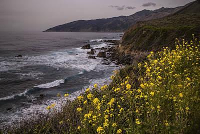 Modern Kitchen - California Coast Flora by Michael Just