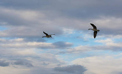 Travel - Canada Geese  by Holden The Moment