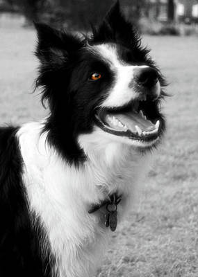 Photograph - Canine Grinning by JAMART Photography