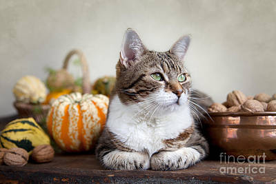 Autumn Photograph - Cat And Pumpkins by Nailia Schwarz