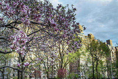 Photograph - Central Park Spring by Robert J Caputo