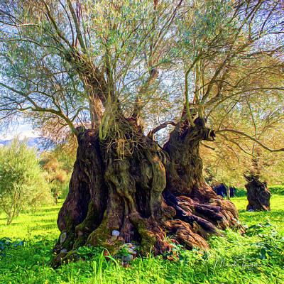 Photograph - Centuries-old Olive Tree by Manolis Tsantakis