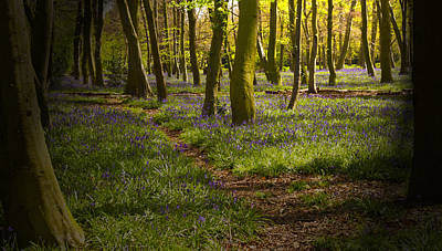 Clouds Rights Managed Images - Chalet Bluebell Woods Royalty-Free Image by David French