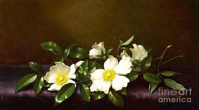 Painting - Cherokee Roses On A Purple Cloth by Martin Johnson Heade