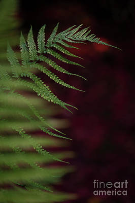Photograph - Close-up Of Fern  by Jim Corwin