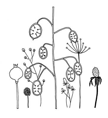 Whimsical Drawings Photograph - Collection Of Various Different Hand Drawn Illustrations Of Gras by Matthew Gibson