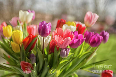 Photograph - Colorful Tulips by Patricia Hofmeester