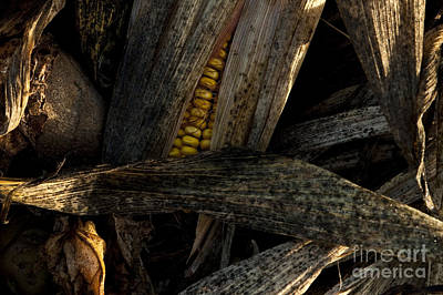 Photograph - Corn In Compost Pile In Field by Jim Corwin
