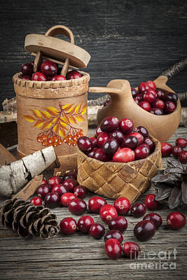 Ripe Photograph - Cranberries Still Life by Elena Elisseeva