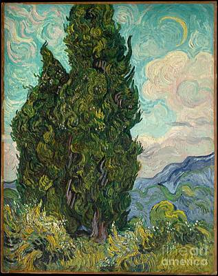 Painting - Cypresses by Celestial Images