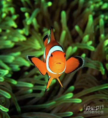 Clown Fish Photograph - 3-d Clown Fish by Paul Gruner