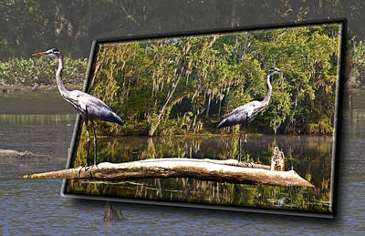 3-d Great Blue Crane Art Print by Michael Whitaker