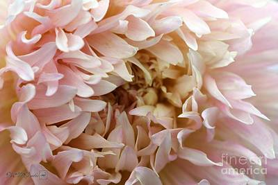Photograph - Dahlia Named Nadia Ruth by J McCombie