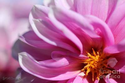 Photograph - Dahlia Named Priceless Pink by J McCombie