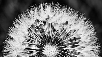 Photograph - Dandelion Art In Black And White by Vishwanath Bhat