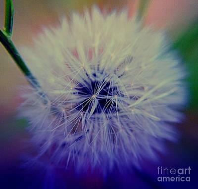 Photograph - Dandelion by Janice Spivey