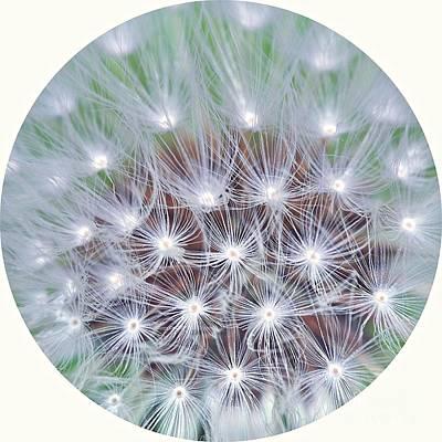 Dandelion Photograph - Dandelion Seeds by MingTa Li