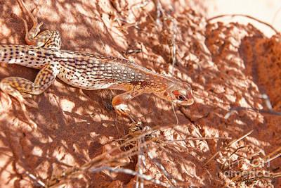 Photograph - Desert Lizard by David Arment