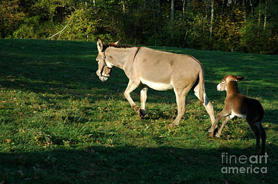 Donkey With Foal Art Print by Thomas R Fletcher