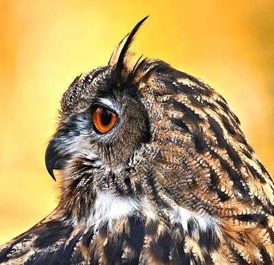 Photograph - Eurasian Eagle Owl by Amy McDaniel