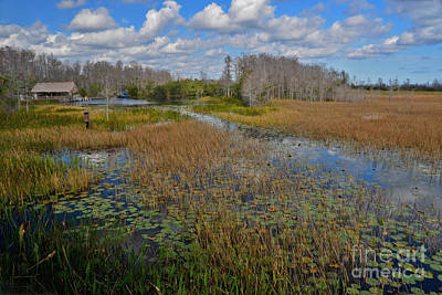 Photograph - 3- Everglades Outpost by Joseph Keane