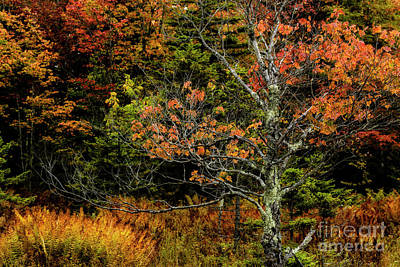 Photograph - Fall Color West Virginia  by Thomas R Fletcher