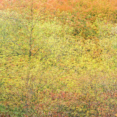 Photograph - Fall Colors - Abstract by Shankar Adiseshan