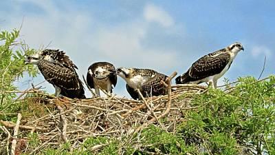 Photograph - Feeding Time by Carol Bradley